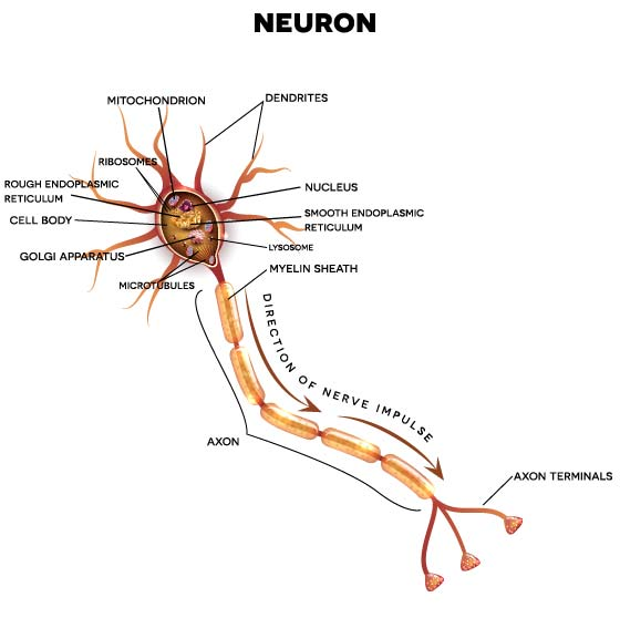 BrainFutures - Neuroplasticity 101